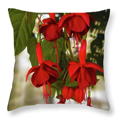 Fuchsia Throw Pillow featuring the photograph Irish Fuchia by Laura Brightwood