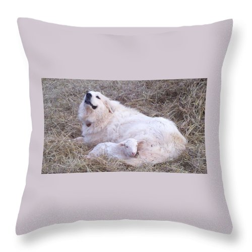 Great Pyrenees Dog Throw Pillow featuring the photograph Isabel and Molly 2 by Ginger Concepcion