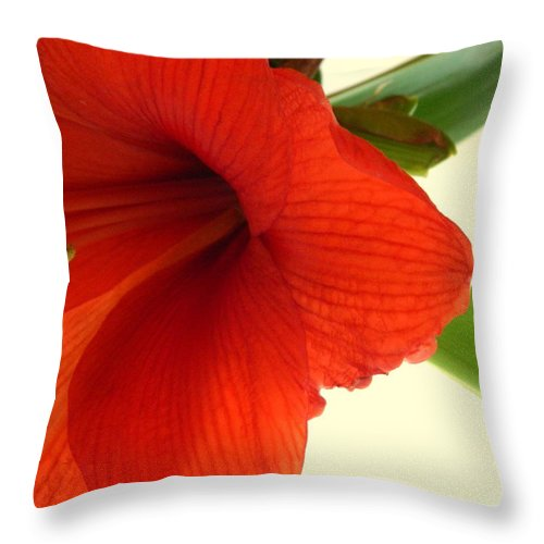 Amaryllis Throw Pillow featuring the photograph It Is Real by Kathy Barney