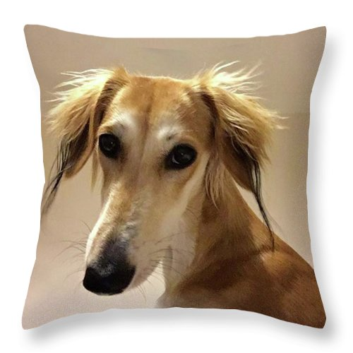 Dogsofinstagram Throw Pillow featuring the photograph It Looks Like It Will Be A Bad Hair Day by John Edwards