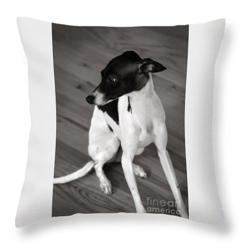 Black And White Throw Pillow featuring the photograph Italian Greyhound In Black And White by Angela Rath