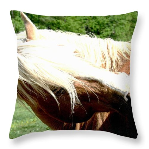 Horse Throw Pillow featuring the photograph Itchy Spot by Tina Meador