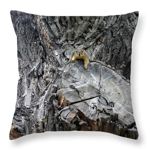 Nature Throw Pillow featuring the photograph It's A Big World by Lucyna A M Green