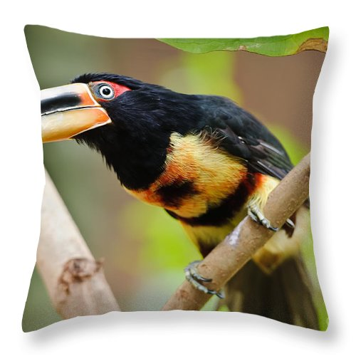 Aquarium Throw Pillow featuring the photograph It's All About The Beak by Charles Dobbs