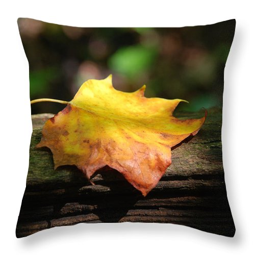 Photography Throw Pillow featuring the photograph Its Fall by Susanne Van Hulst