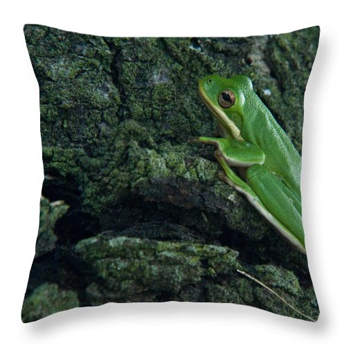 Frog Throw Pillow featuring the photograph Its Hard To Be Green by Douglas Barnett
