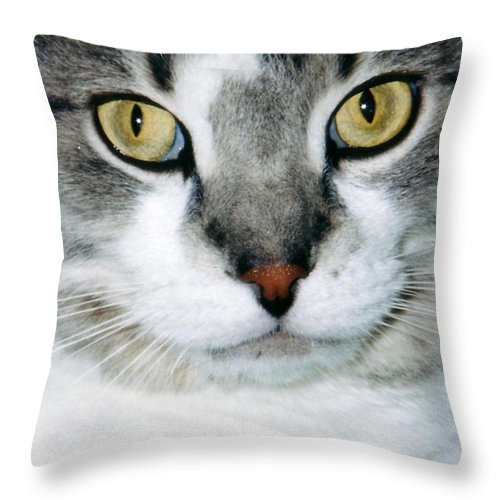 Animal Throw Pillow featuring the photograph It's In The Cat Eyes by Corinne Elizabeth Cowherd