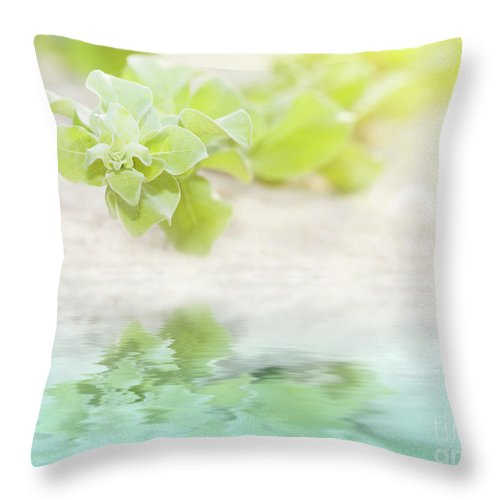 Reflection Throw Pillow featuring the photograph ivy by MotHaiBaPhoto Prints