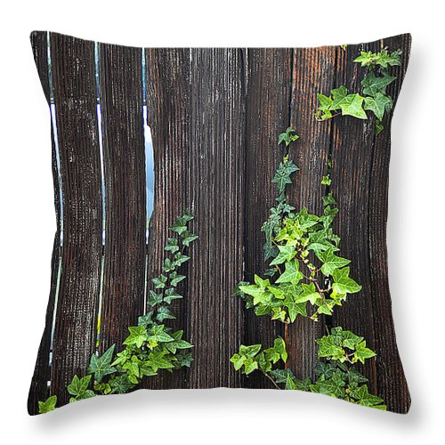 Clay Throw Pillow featuring the photograph Ivy On Fence by Clayton Bruster
