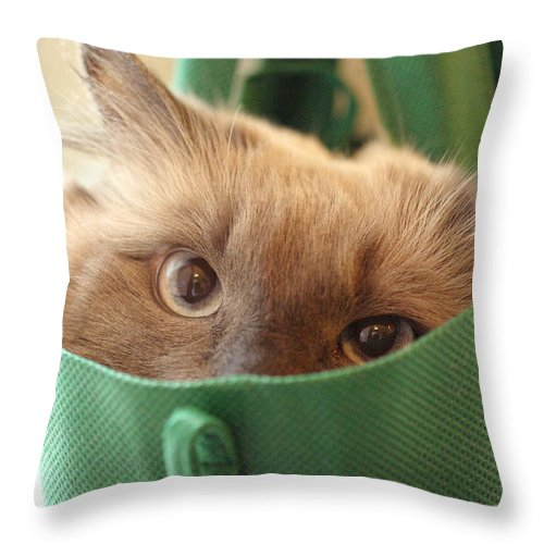 Cat Throw Pillow featuring the photograph Jack In The Bag by Cindy Johnston