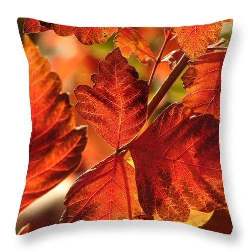 Photograph Throw Pillow featuring the photograph Jack Painted My Yard by J R Seymour