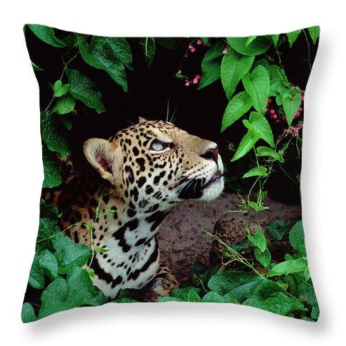 Mp Throw Pillow featuring the photograph Jaguar Panthera Onca Peeking by Claus Meyer