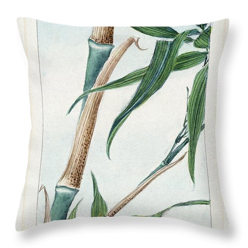 1870s Throw Pillow featuring the photograph Japan: Bamboo, C1870s by Granger