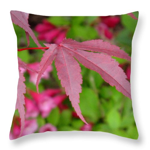 Japanese Maple Throw Pillow featuring the photograph Japanese Maple by Ian MacDonald