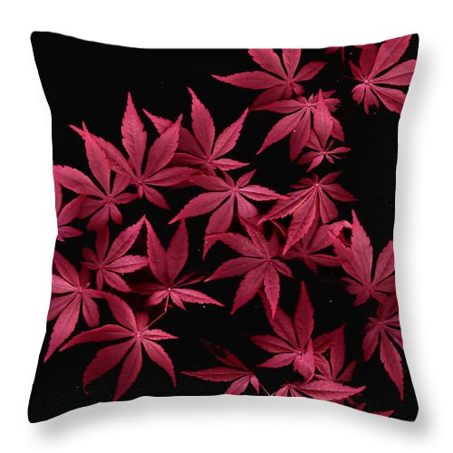 Japanese Maple Throw Pillow featuring the photograph Japanese Maple Leaves by Wayne Potrafka