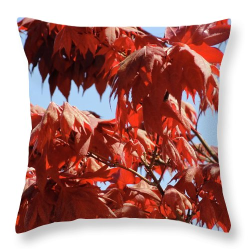 Japanese Maple Throw Pillow featuring the photograph Japanese Maple by Shannon Grissom