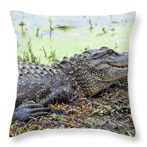 Jarvis Creek Gator Throw Pillow featuring the photograph Jarvis Creek Gator by William Bosley