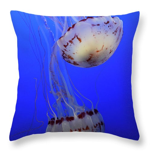 Jellyfish Throw Pillow featuring the photograph Jellyfish 1 by Bob Christopher