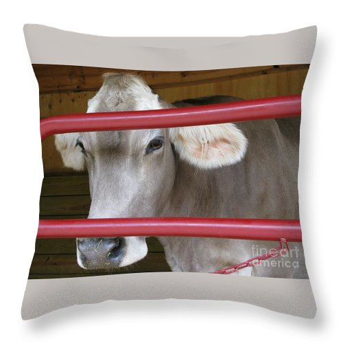 Calf Throw Pillow featuring the photograph Jersey Calf by Ann Horn