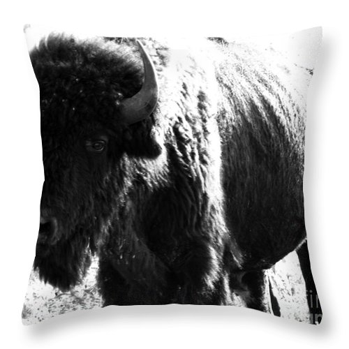 Buffalo Throw Pillow featuring the photograph Join The Party by Amanda Barcon
