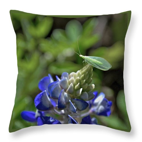 Bluebonnets Throw Pillow featuring the photograph Jolly Green Giant by Donna Shahan