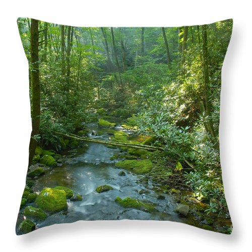 Joyce Kilmer Memorial Forest Throw Pillow featuring the photograph Joyce Kilmer Memorial Forest by David Lee Thompson