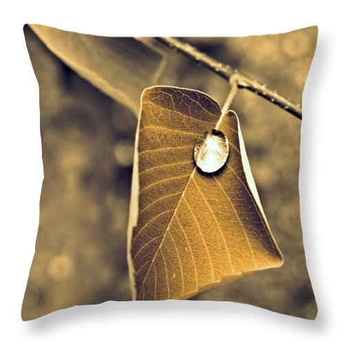 Leaf Throw Pillow featuring the photograph June 18 2010 by Tara Turner