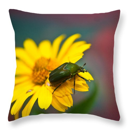 June Throw Pillow featuring the photograph June Beetle by Douglas Barnett
