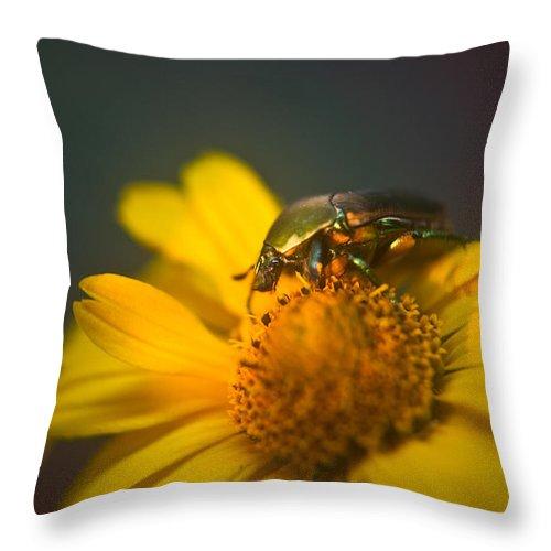 June Throw Pillow featuring the photograph June Beetle Exploring by Douglas Barnett