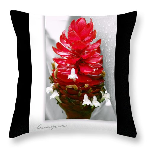 Nature Throw Pillow featuring the photograph Jungle King Ginger by Holly Kempe