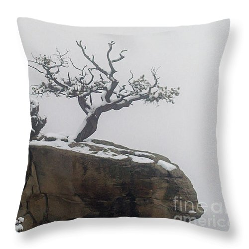 Tree Throw Pillow featuring the photograph Juniper In Snow-signed-#2572 by J L Woody Wooden