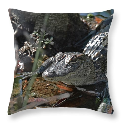 American Alligator Throw Pillow featuring the photograph Just A Baby by Sally Sperry