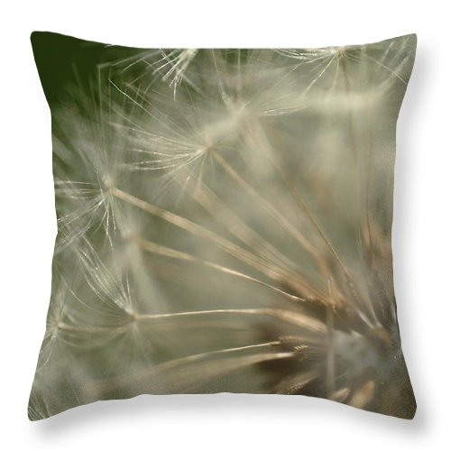 Dandelion Throw Pillow featuring the photograph Just A Weed by Michael McGowan