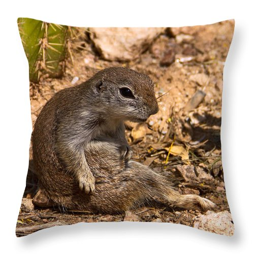 Squirrel Throw Pillow featuring the photograph Just Chillin by Kelly Holm