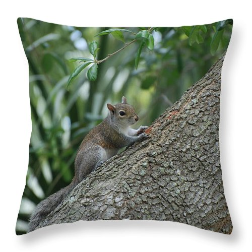 Squirrels Throw Pillow featuring the photograph Just Chilling Out by Rob Hans