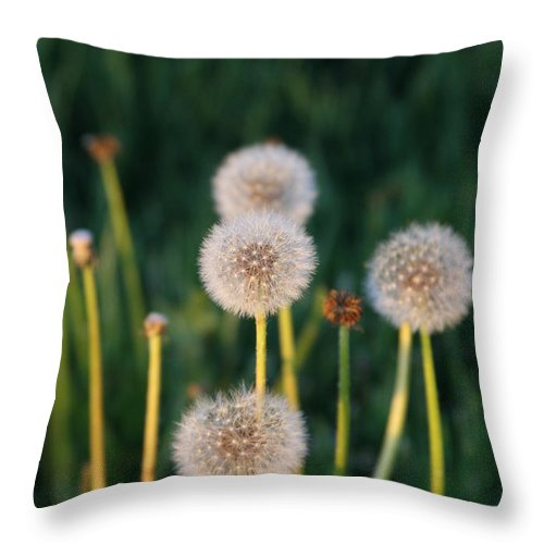 Dandilions Throw Pillow featuring the photograph Just Dandi by JoJo Photography