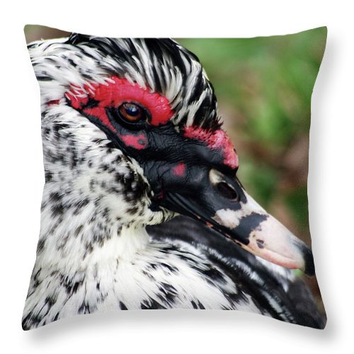 Muscovy Drake Throw Pillow featuring the photograph Just Ducky... by Arthur Miller
