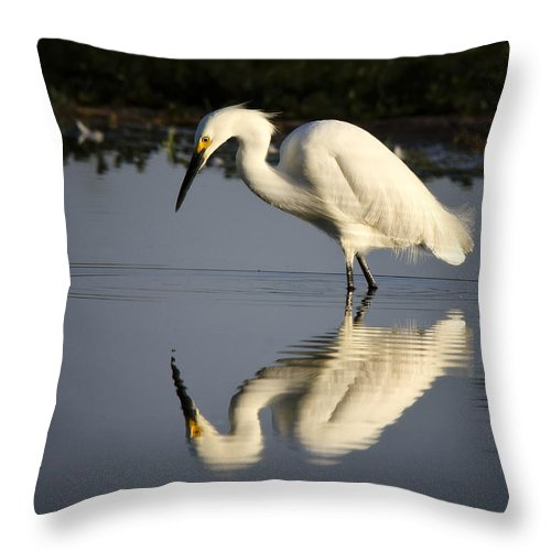 Snowy Egret Throw Pillow featuring the photograph Just Like Looking In The Mirror by Saija Lehtonen
