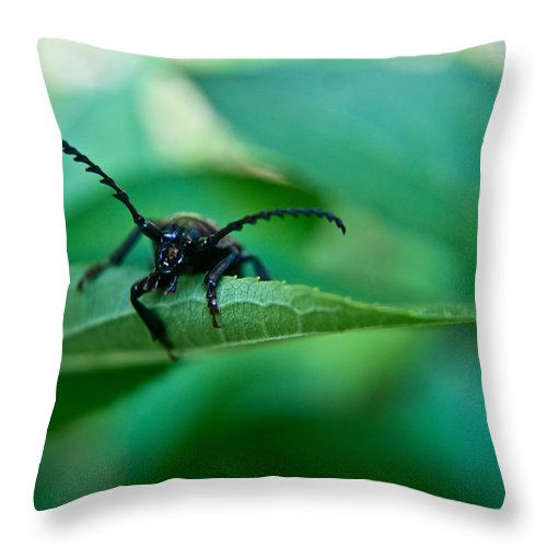 Beetle Throw Pillow featuring the photograph Just Looking For Another Beetle by Douglas Barnett