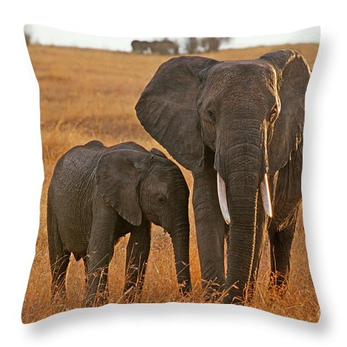 Africa Throw Pillow featuring the photograph Just Mom And Me by Sandra Bronstein