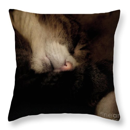 Cat Throw Pillow featuring the photograph Just Sleep by Angel Ciesniarska