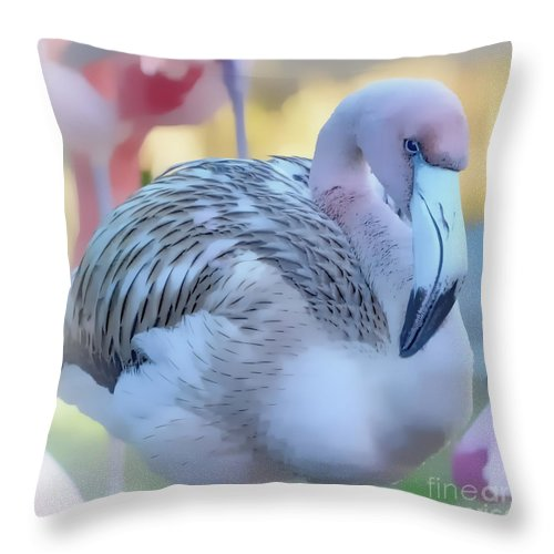Wildlife Throw Pillow featuring the photograph Juvenile Flamingo Pastles Square by Kathy Baccari