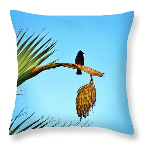 Red Vented Bulbul Throw Pillow featuring the photograph Juvenile Red Vented Bubbul by Craig Wood