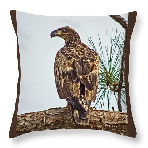 Bird Throw Pillow featuring the photograph Juvenile by T Guy Spencer