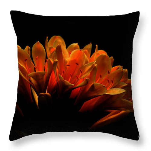 Floral Throw Pillow featuring the photograph Kaffir Lily by James Eddy
