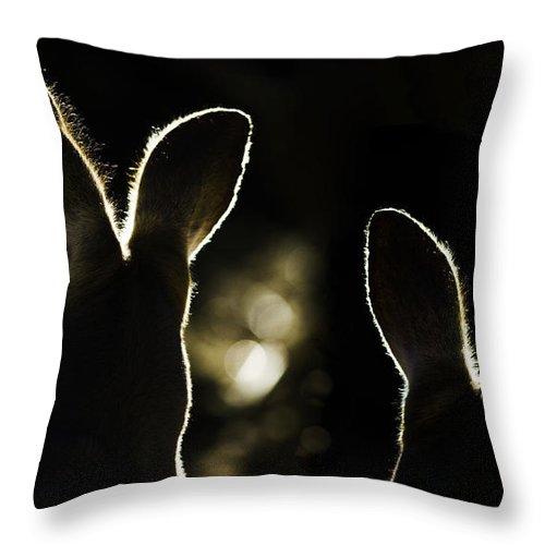 Kangaroo Throw Pillow featuring the photograph Kangaroos Backlit by Sheila Smart Fine Art Photography