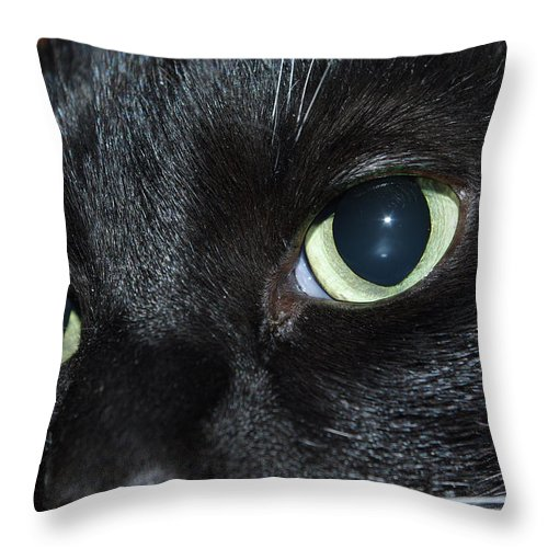 Cat Throw Pillow featuring the photograph Katy - The Eyes Have It by Robyn Stacey
