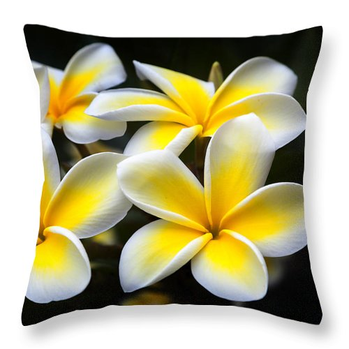 Plumeria Throw Pillow featuring the photograph Plumerias Canvas Print,photographic Print,art Print,framed Print,iphone Case,samsung Galaxy Case, by David Millenheft