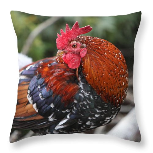 Rooster Throw Pillow featuring the photograph Kauai Rooster by Nadine Rippelmeyer