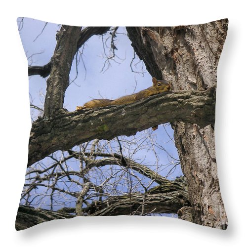 Nature Throw Pillow featuring the photograph Keeping A Low Profile by Lucyna A M Green